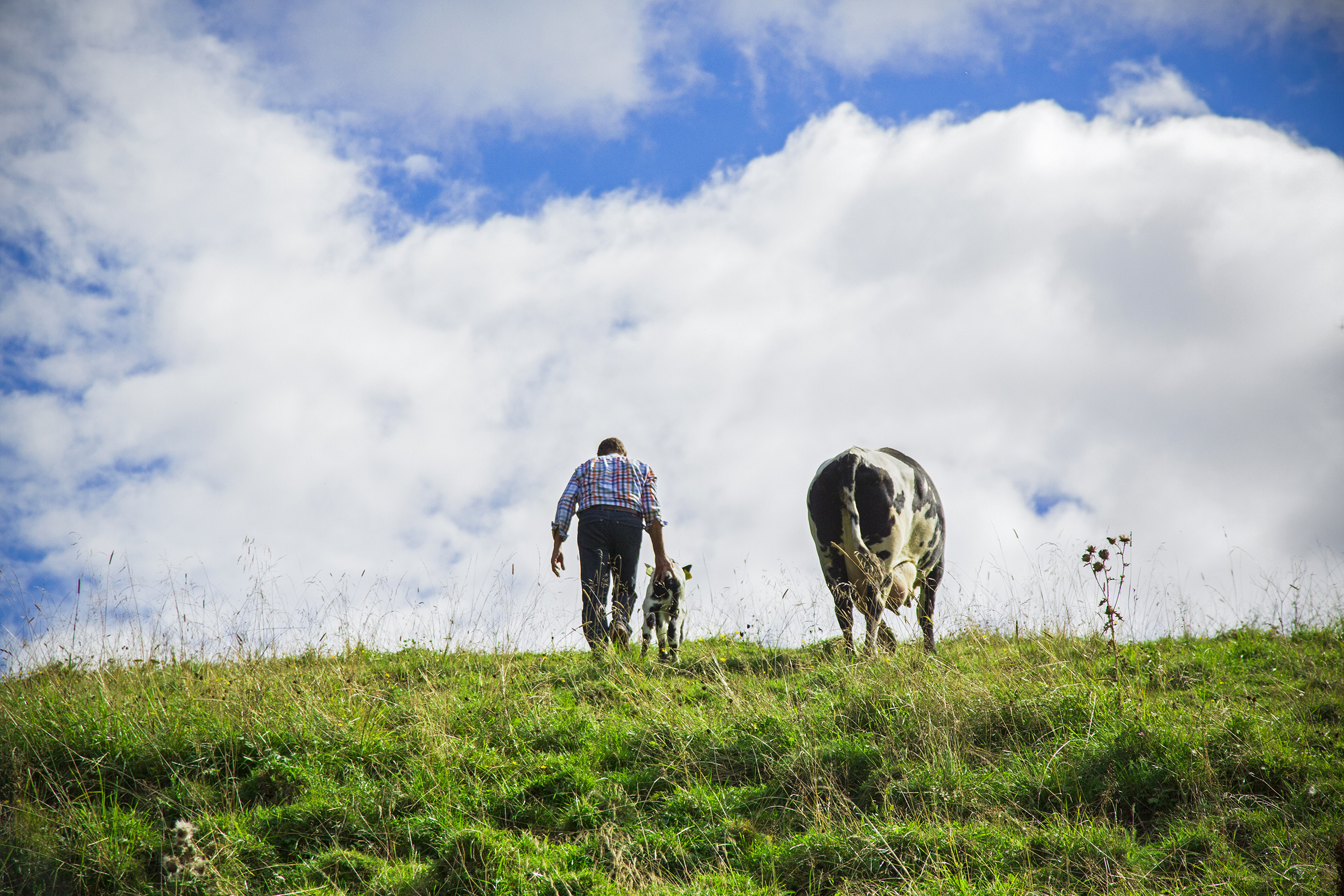Bonde med kyr på Grøndalen gård
